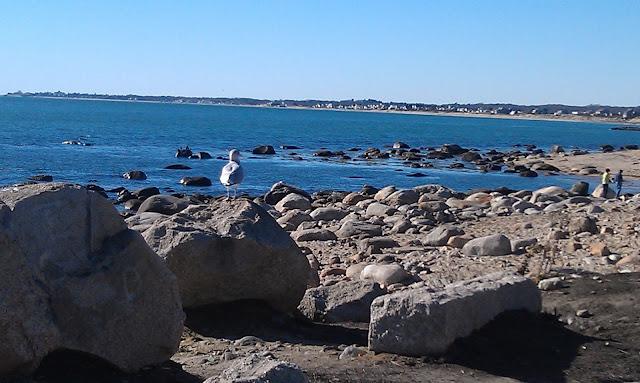 birds near ocean