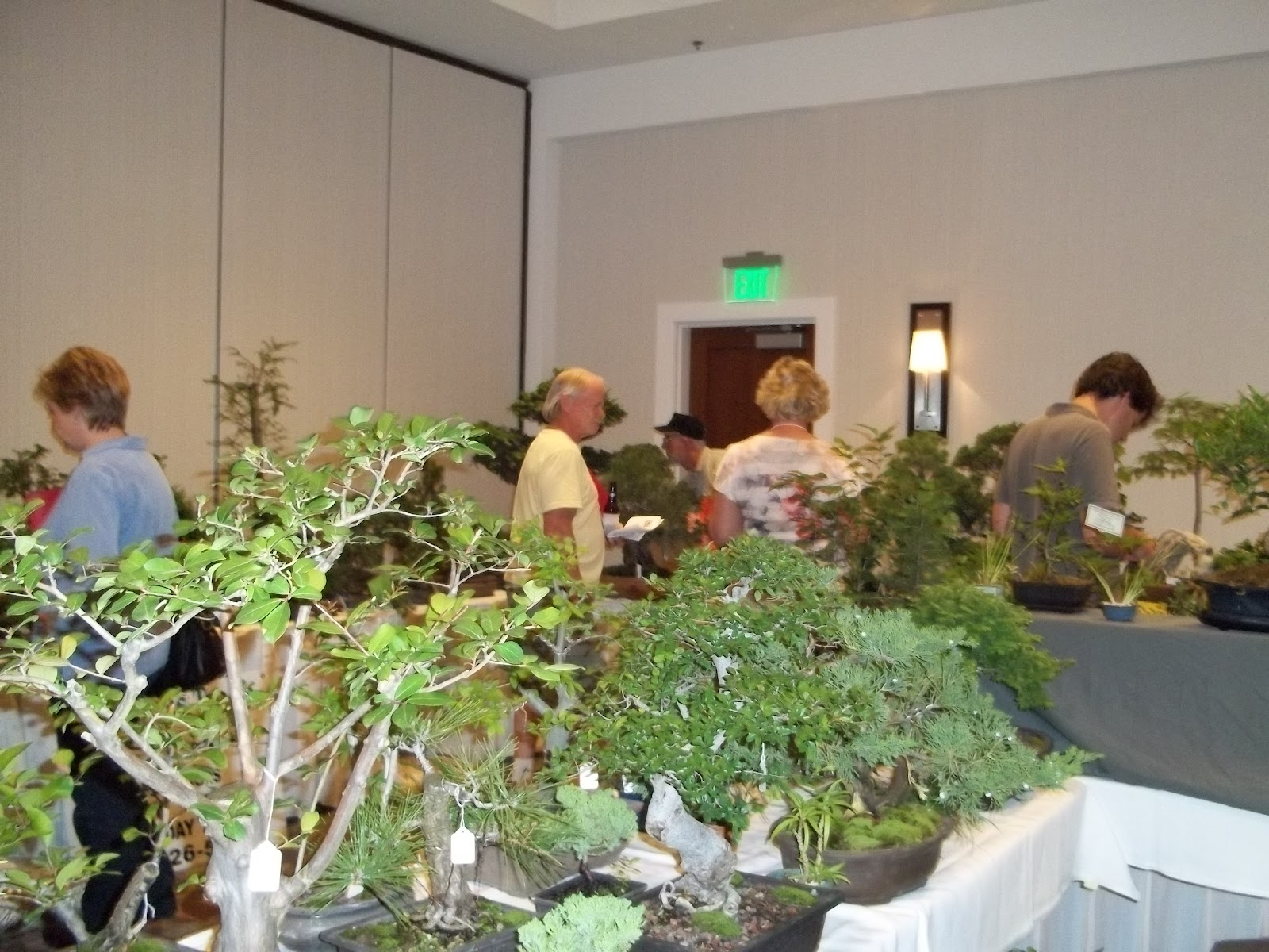 Bent Tree Bonsai Dallas State Bonsai Convention 2012