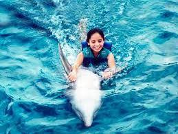 Lumba Lumba Adalah Malaikat Samudera - www.jurukunci.net