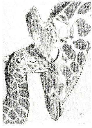 Giraffe love for baby pic