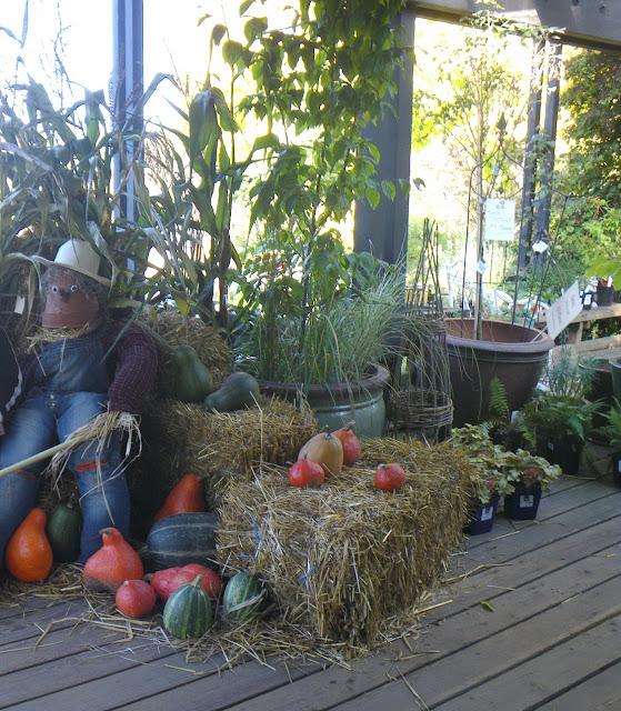 Fall-themed decor:  pumpkins, hay, corn-shock, scarecrows, at VanDusen Botanical Garden