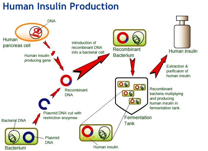 Invertase enzyme