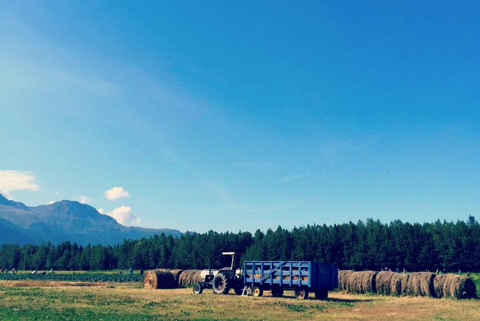 pyrah's pioneer peak farm