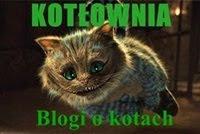 Spis powszechny kocich blogów