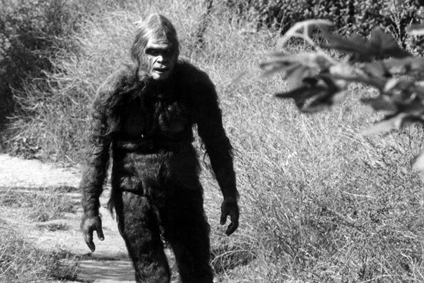 Bigfoot Sightings 2013