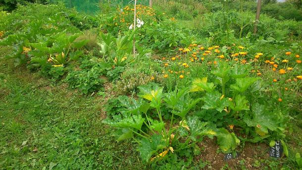 La permaculture en douceur à lindouar