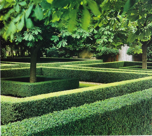Boxwood of the week 4 thinking outside the boxwood for Garden design ideas with hedges