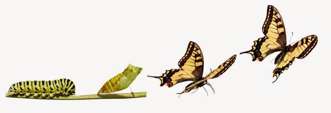 MOTIVA TU CAMBIO Mariposas+ley+del+cambio