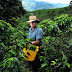 Coffee market wakes up to Colombian rivals