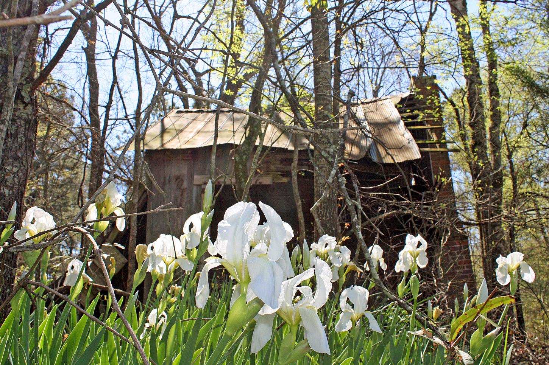 Southern Lagniappe The Glory Of Irises