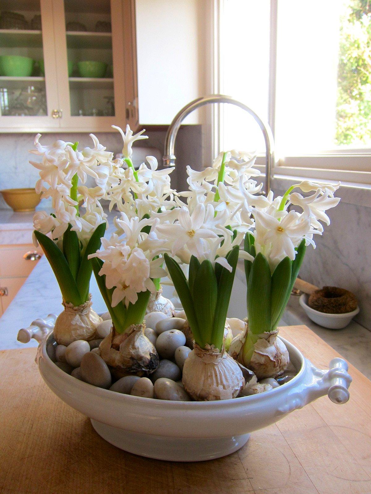 Chronica domus the sweet smell of hyacinths a diminutive hyacinth reviewsmspy