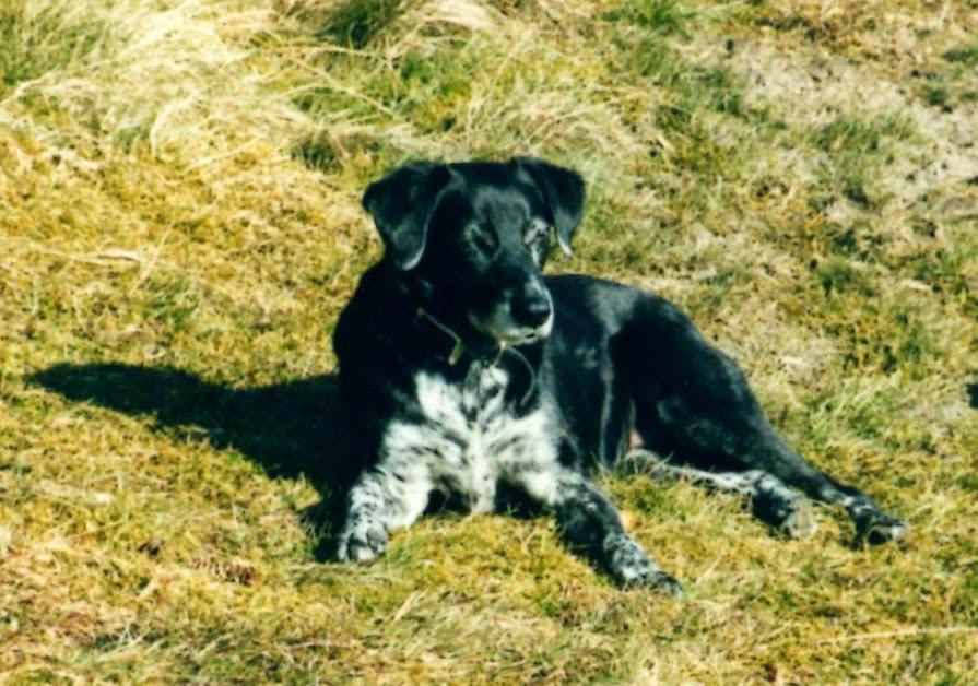 Tracy 1993 - 2005