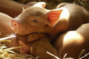 Declaración Universal de los Derechos Animales.