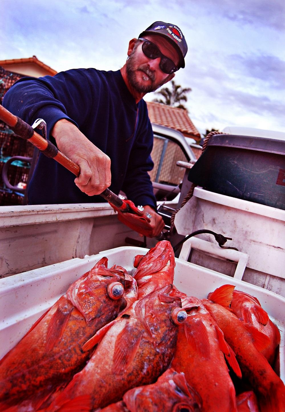 red rockfish, vermilion rockfish, Wild West, local seafood, San Diego, Tuna Harbor Dockside Market
