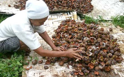 make mangosteen peel as medicine