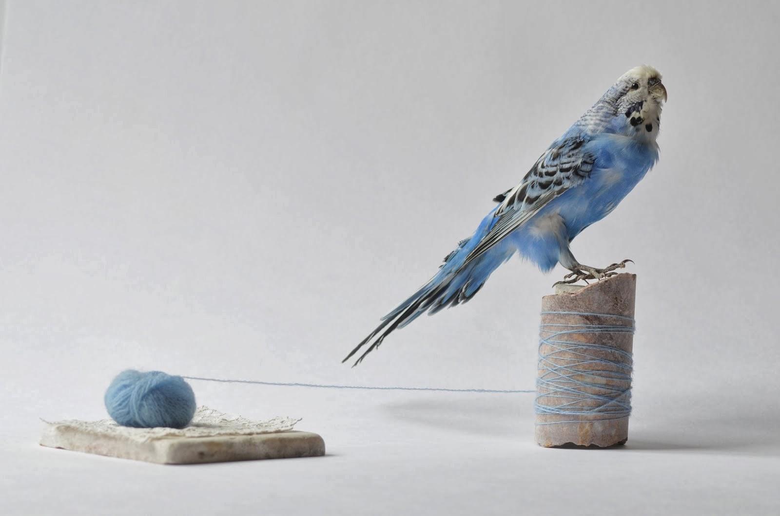 la marbrerie