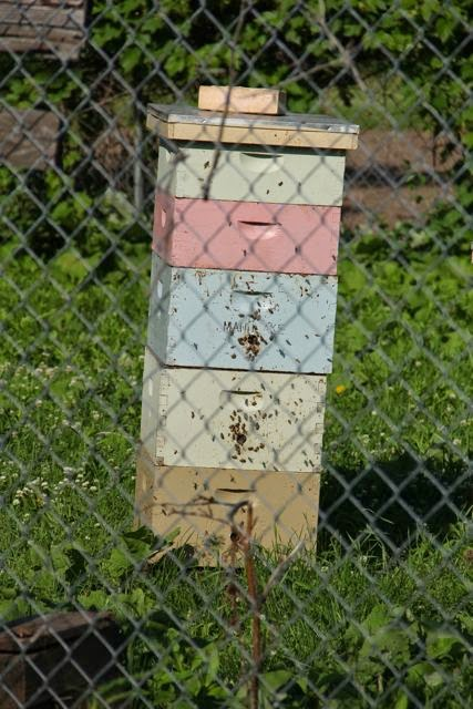 bees at a hive