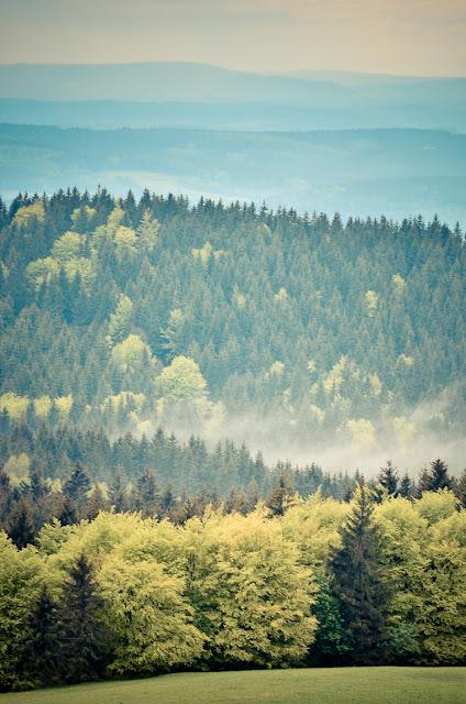 forest  thüringer wald