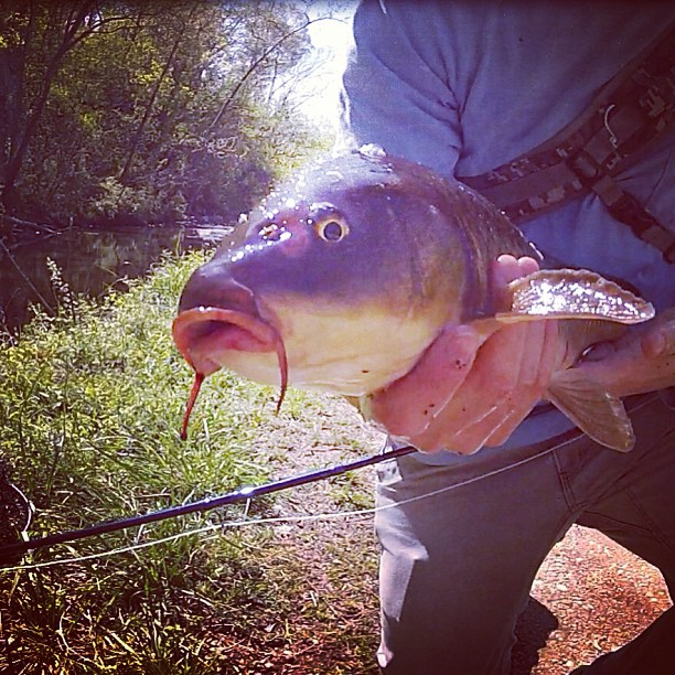 Tight lined tales of a fly fisherman fly product review for Fishing reel ringtone