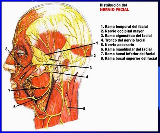Pruebas para el nervio facial