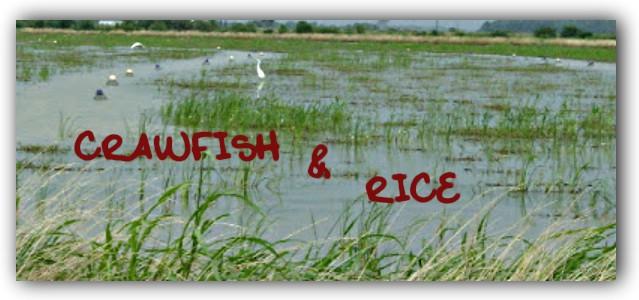 Crawfish & Rice: Pasta