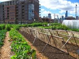 Contoh Pertanian Organik Teknologi Ramah Lingkungan
