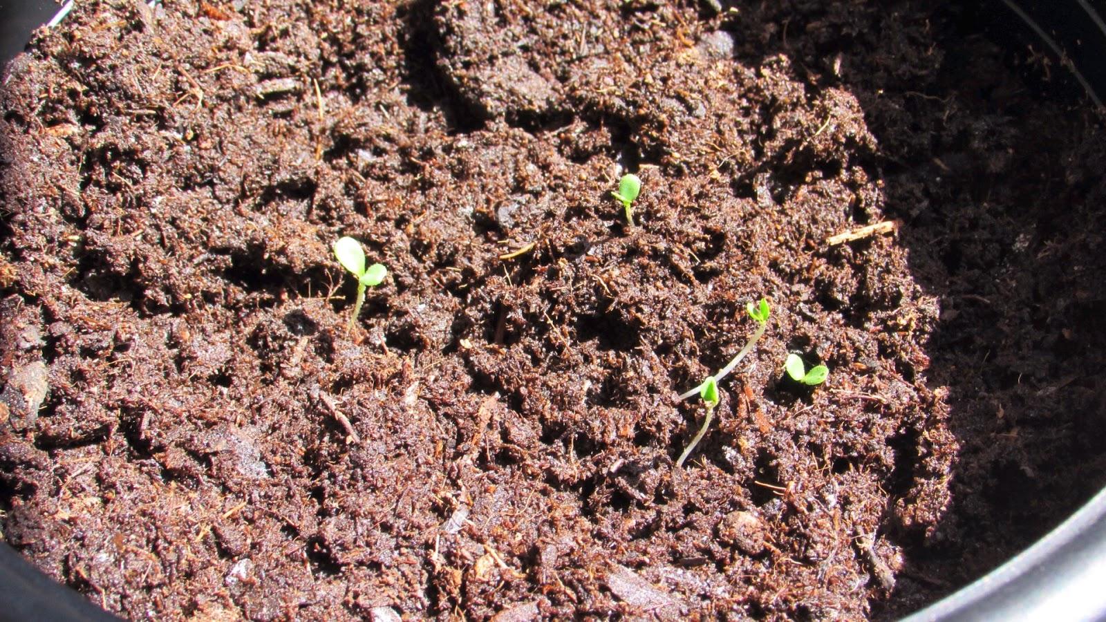 My First Garden  Ten Tips For First Time Gardeners