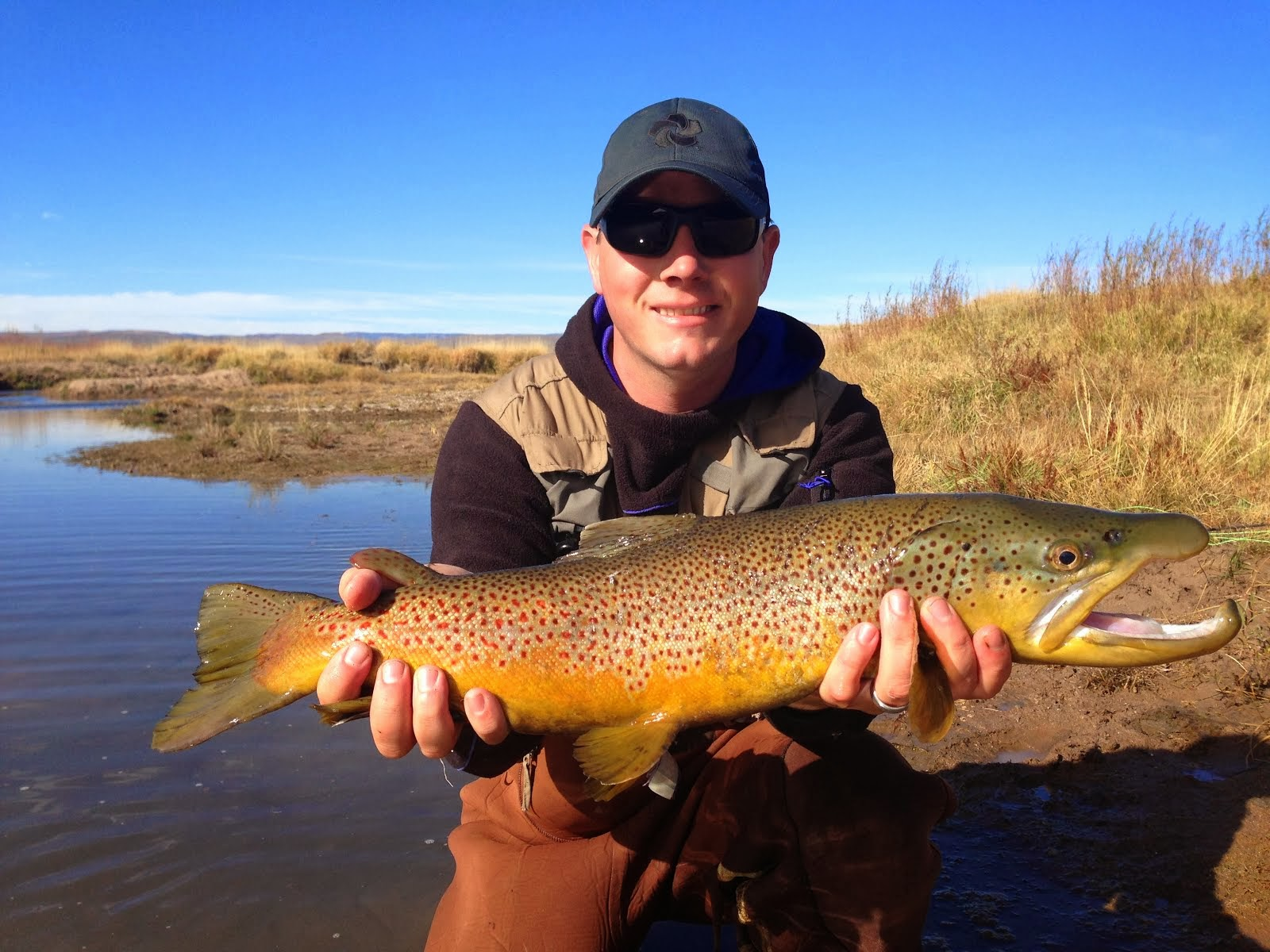 Monster Bear River Brown