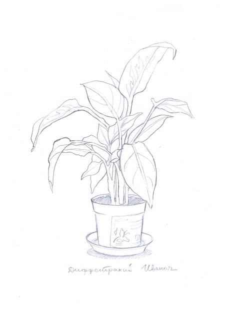 набросок растения