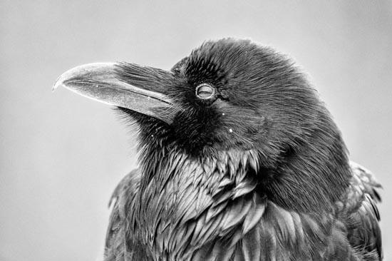 Birds - National Geographic Photo Contest 2012   Wordless Wednesday #WW