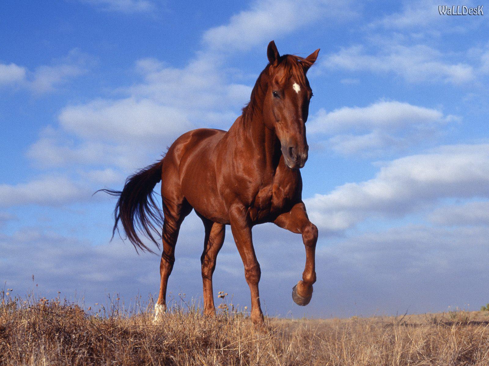 De tudo e mais um pouco cavalos lindos - Chevaux gratuits ...