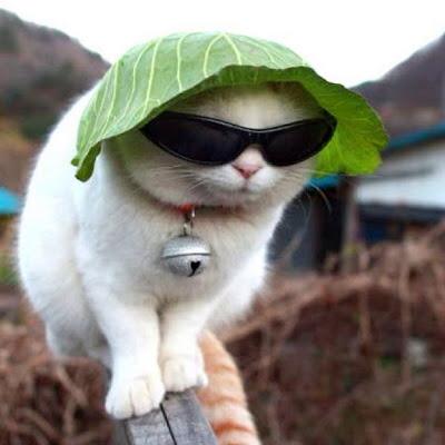 LETTUCE CAT