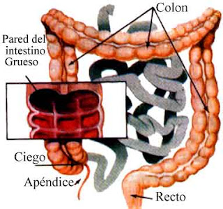 La Hidroterapia del Colon