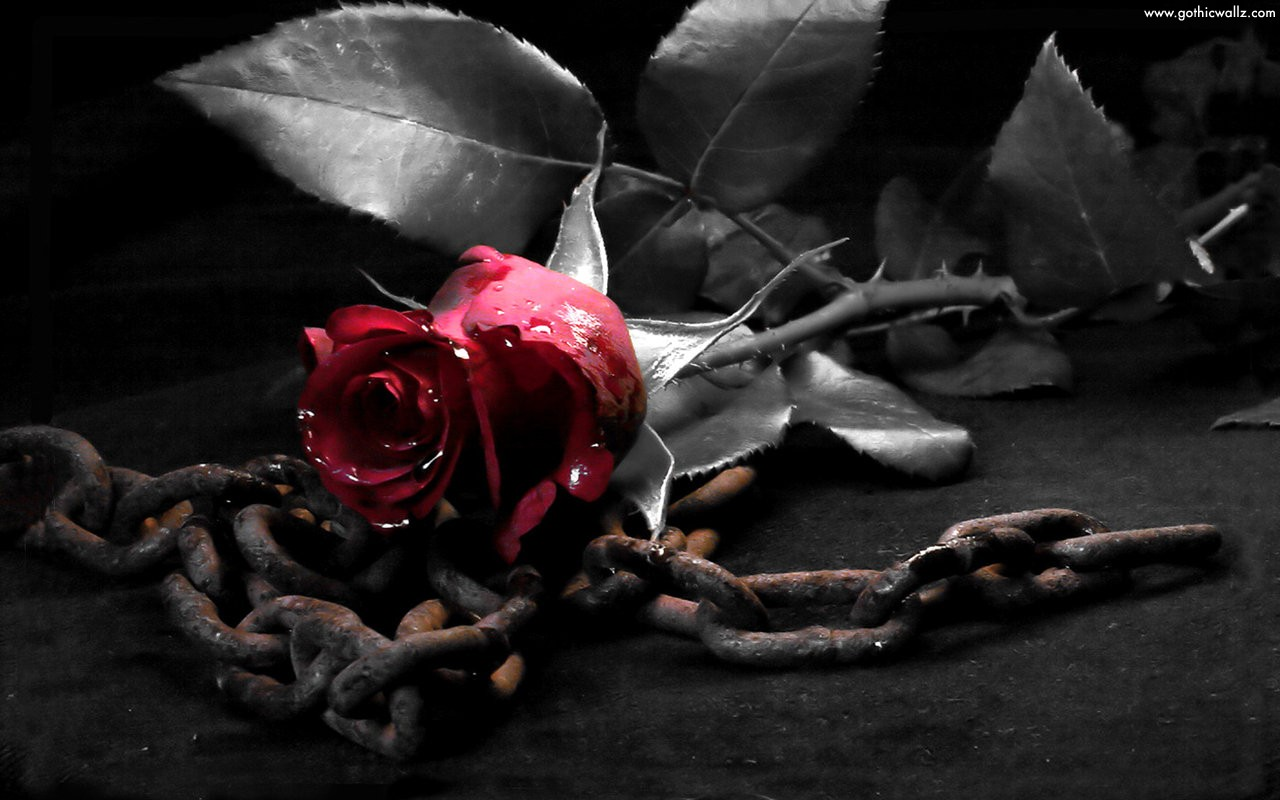Rose With Metal Chain | Gothic Wallpaper Download