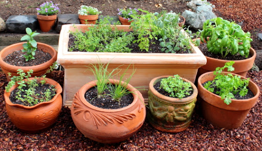 Food Wishes Video Recipes Grow Your Own Culinary Herb Garden