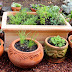 Grow Your Own Culinary Herb Garden – Yard to Table