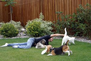 Jugando con perros