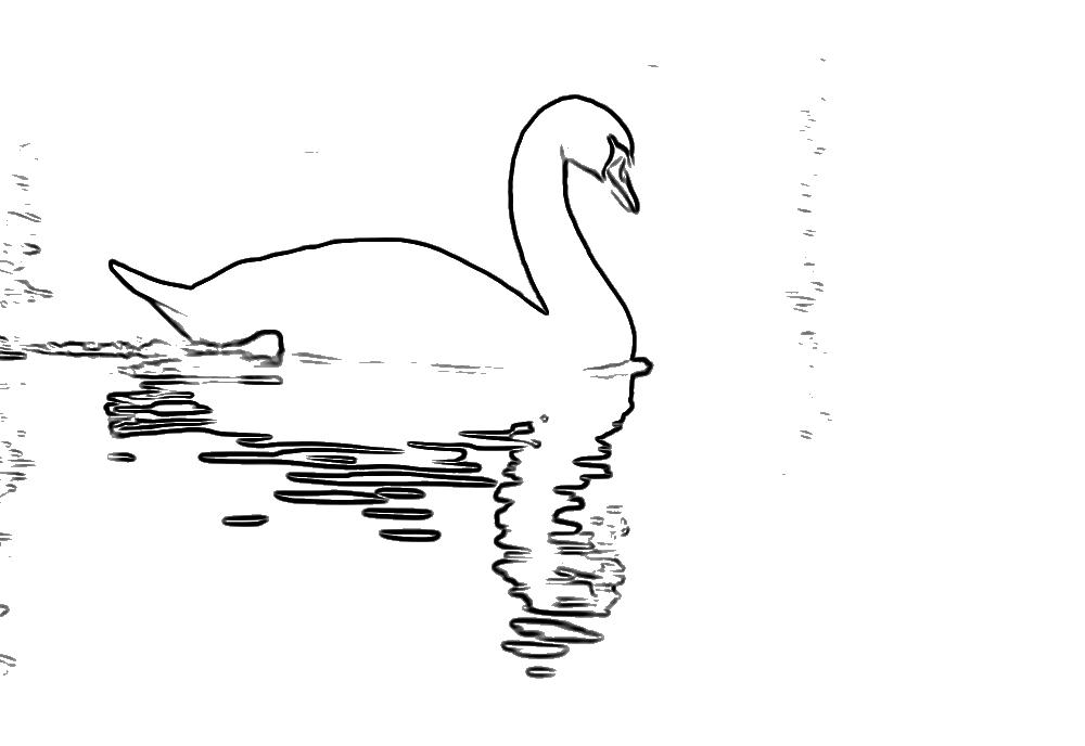 free swan coloring pages - photo#25