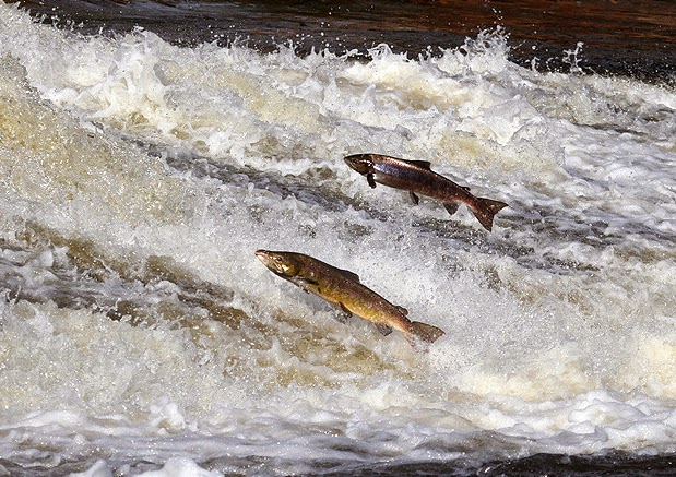 http://www.thesouthernreporter.co.uk/news/business/problems-at-sea-hit-2014-salmon-season-1-3729358