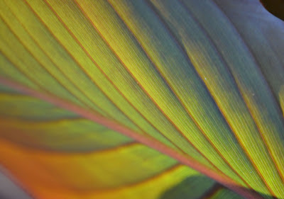 photo of leaf by Nancy Zavada