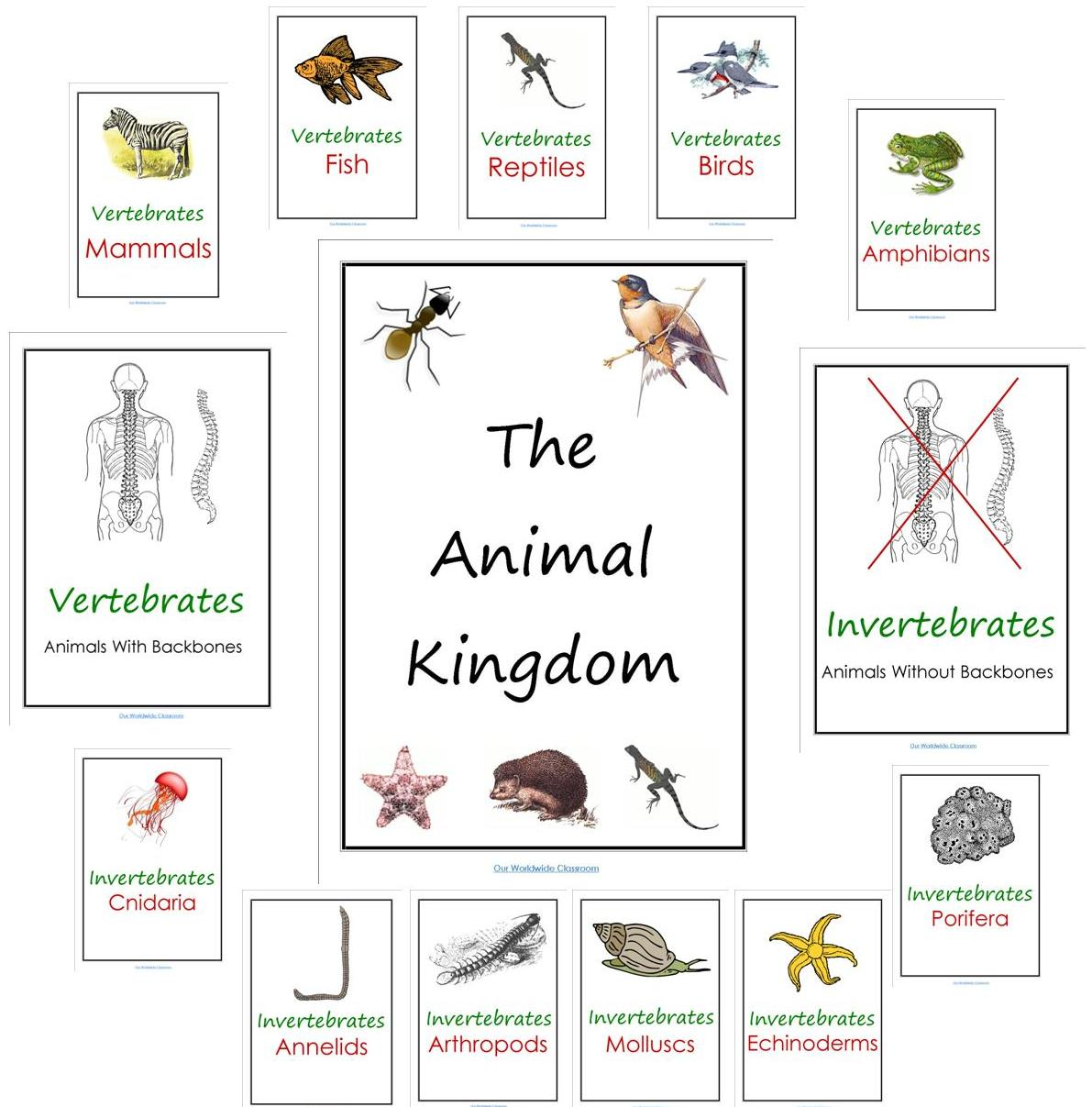 Worksheets Kingdom Classification Worksheet our animal kingdom notebooks with printable materials