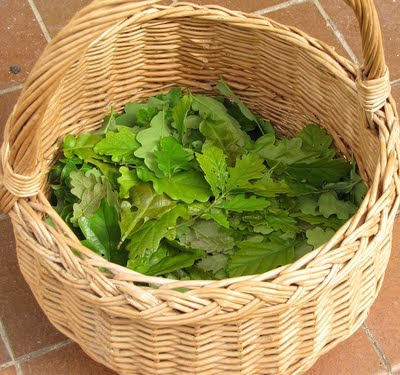 oak leaves in basket