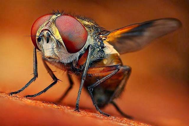 fotografias-de-insectos
