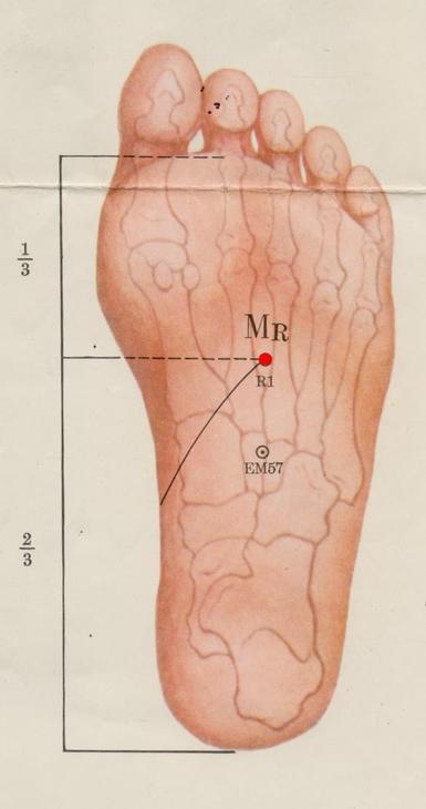 Sabidur a del esp ritu canal del ri n punto r1 yongquan for En k parte del cuerpo estan los rinones