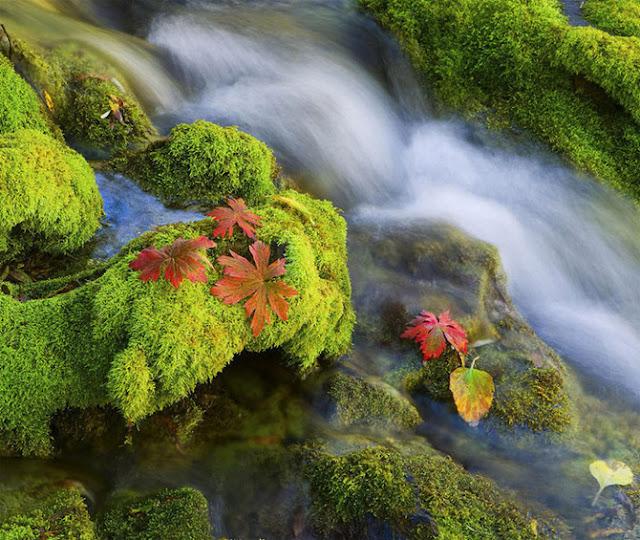 Sorprendentes Paisajes de la Naturaleza