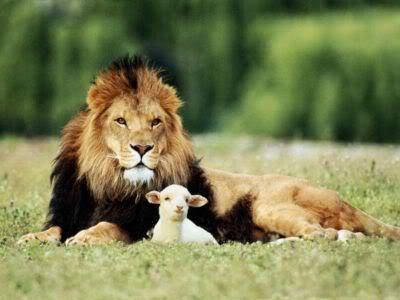 imágenes del cordero y leon