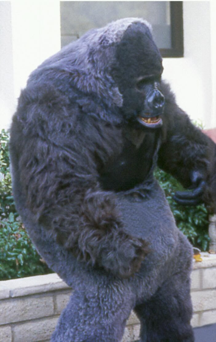 [ The above photo is Dale in his gorilla suit. I donu0027t know who made it for him. Itu0027s not the best gorilla suit but he put a lot of body & Hollywood Gorilla Men: Dale Park !...Video Game Gorilla Man !