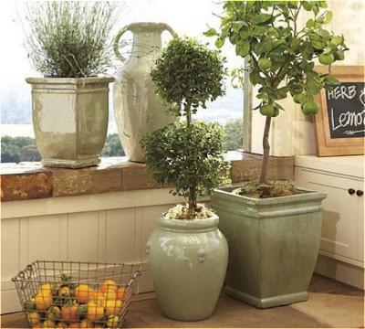 Elegir plantas naturales o artificiales en la decoración