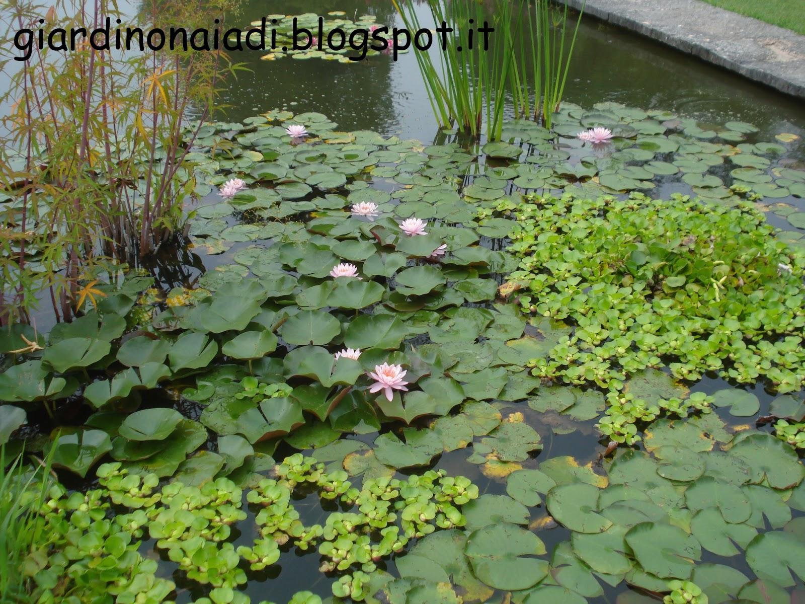 Il giardino delle naiadi laghetti a maggio for Laghetto acqua verde