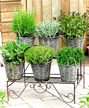Come ti coltivo le aromatiche piante in fiore e il mio for Coltivazione basilico in vaso